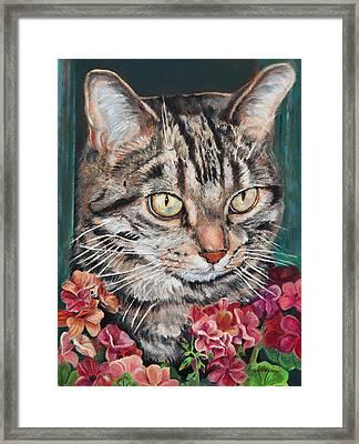 Cooper The Cat Framed Print by Enzie Shahmiri