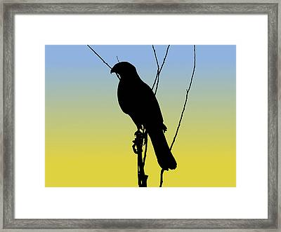 Coopers Hawk Silhouette At Sunrise Framed Print