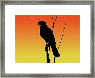 Coopers Hawk Silhouette At Sunset Framed Print
