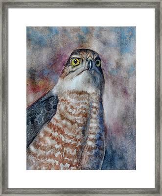 Coopers Hawk Wc Framed Print