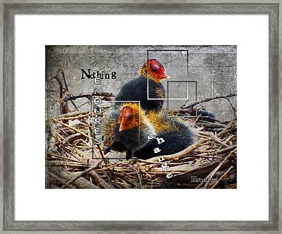 Coots In Nest Framed Print by Judi Saunders