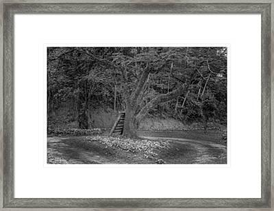 Copo De Leite-2-mendes-rj Framed Print