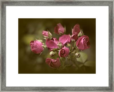 Copper Petals Framed Print by Jessica Jenney