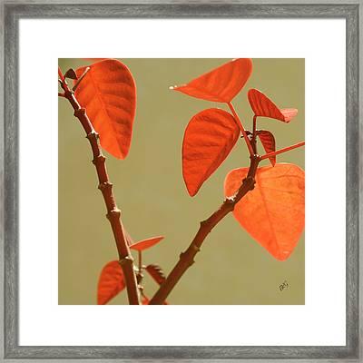 Copper Plant Framed Print