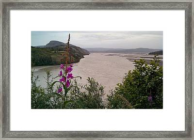 Framed Print featuring the photograph Copper River Fireweed by Adam Owen