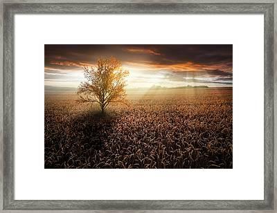 Copper Sunset Framed Print by Debra and Dave Vanderlaan
