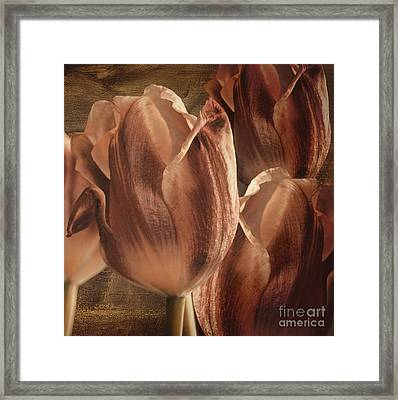 Copper Tulips Framed Print by Mindy Sommers