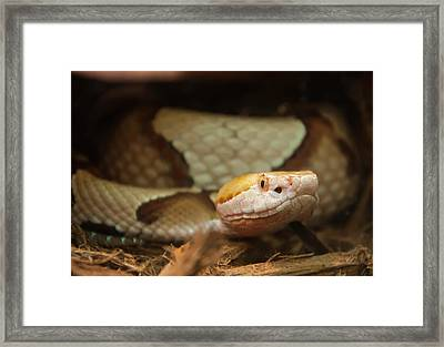 Framed Print featuring the digital art Copperhead by Chris Flees