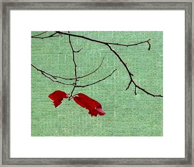 Coquetry Framed Print by Ioana Geacar