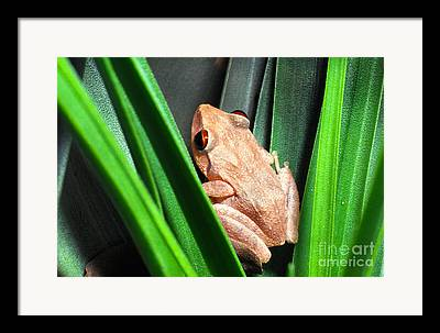 Tiny Tree Frog Framed Prints