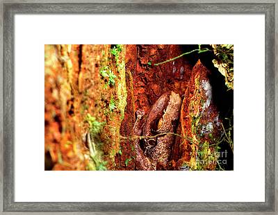 Coqui In Tree Bark Framed Print by Thomas R Fletcher