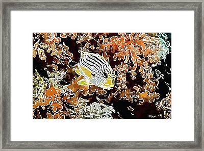 Coral And Fish 11 Framed Print by Lanjee Chee