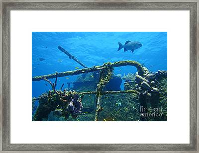 Coral And Fish On A Caribbean Shipwreck Framed Print by John Malone