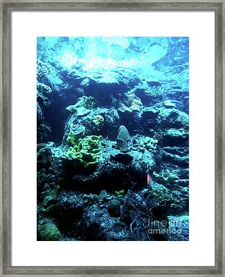 Framed Print featuring the photograph Coral Art 4 by Francesca Mackenney