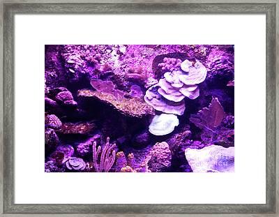 Framed Print featuring the digital art Coral Art 5 by Francesca Mackenney