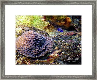 Framed Print featuring the digital art Coral Art Cu 3 by Francesca Mackenney