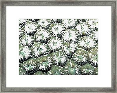 Coral Close Up  Framed Print by Lanjee Chee