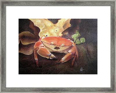 Coral Crab Framed Print by Adam Johnson