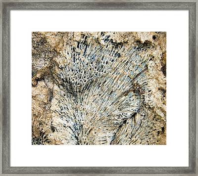 Framed Print featuring the photograph Coral Fossil by Jean Noren