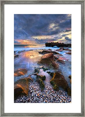 Coral Garden II Framed Print by Debra and Dave Vanderlaan