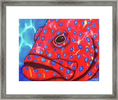Coral Grouper Fish Framed Print