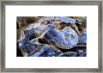 Coral Framed Print by Michele Caporaso