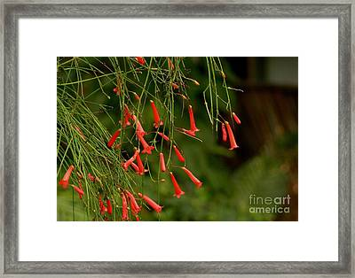 Coral Plant 1 Framed Print