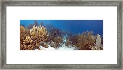 Coral Reef Framed Print by Peter Scoones