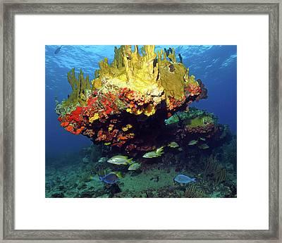 Coral Reef Scene, Calf Rock, Virgin Islands Framed Print