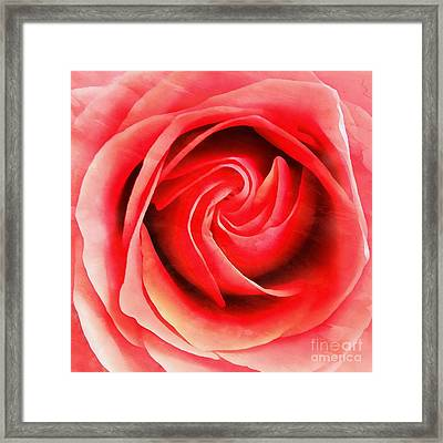 Framed Print featuring the photograph Coral Rose - My Pleasure - Rose by Janine Riley