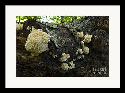 Trees Growing On Body Framed Prints