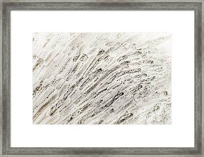 Coral Texture Framed Print