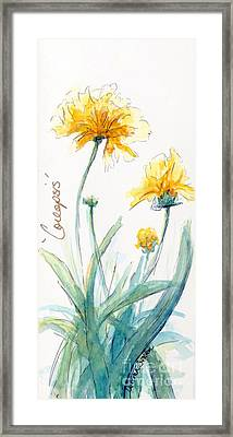 Coreopsis Framed Print by CheyAnne Sexton