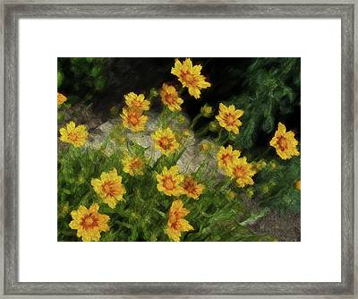 Coreopsis Tickseed Framed Print