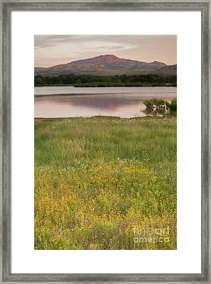 Corepsis Blooming At The Quanah Parker Lake Framed Print by Iris Greenwell