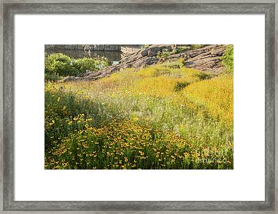 Corepsis Field Of Dreams Framed Print by Iris Greenwell