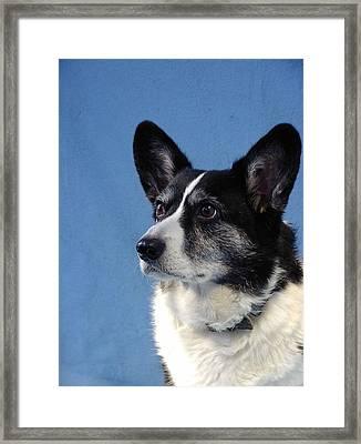 Corgi 15078 Framed Print by Larry Matthews