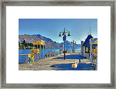 Framed Print featuring the drawing Corgi At Queenstown New Zealand by Kathy Kelly