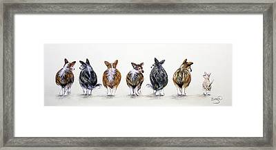 Corgi Butt Lineup With Chihuahua Framed Print by Patricia Lintner