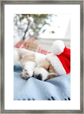 Corgi In Santa Hat Sleeping Framed Print by Gillham Studios