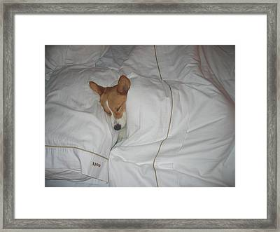 Corgi Sleeping Softly Framed Print by Don Struke