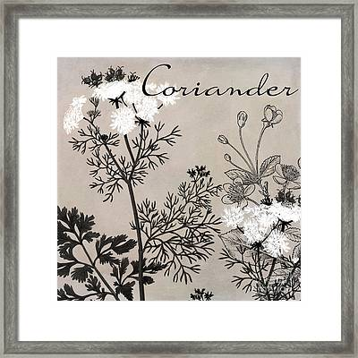 Coriander Flowering Herbs Framed Print by Mindy Sommers