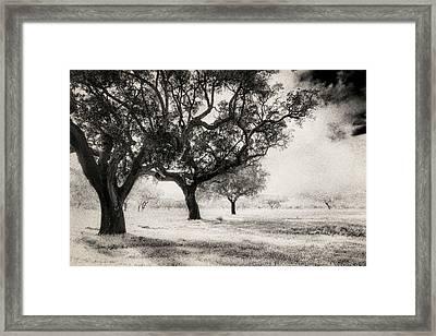 Cork Trees Framed Print