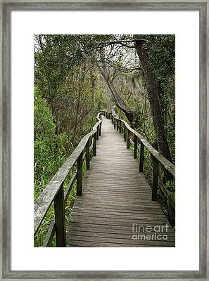 Corkscrew Boardwalk Framed Print