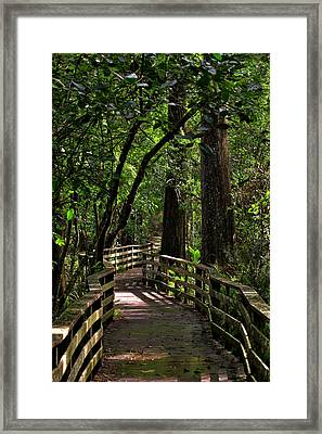 Corkscrew Swamp Framed Print by Nick  Shirghio