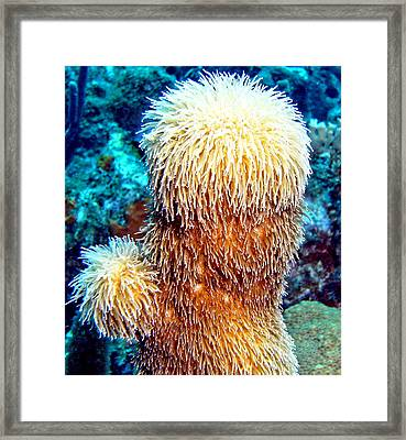 Corky Sea Finger Coral - The Muppet Of The Deep Framed Print by Amy McDaniel
