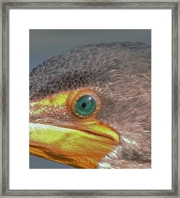 Cormarant 5 Framed Print