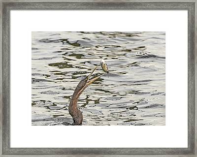 The Catch Framed Print by Patrick Kain
