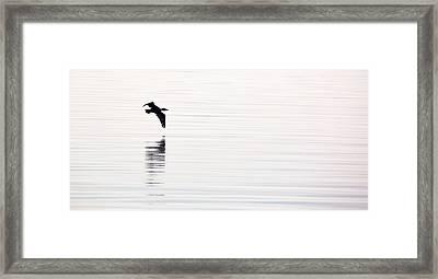 Cormorant Flight Framed Print