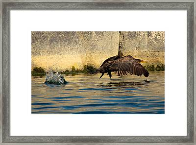 Cormorant In Motion Framed Print by Amy Sorvillo